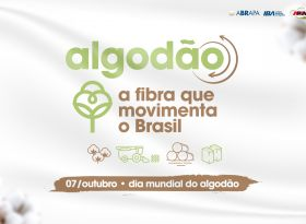 Algodão, a fibra que movimenta o Brasil