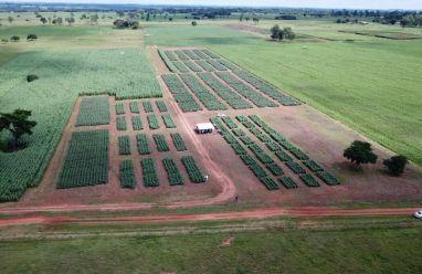 Experimentos de variedades APPA em parceria com a Universidade UNOESTE