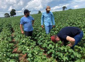 APPA realiza visita lavouras de algodão no oeste paulista